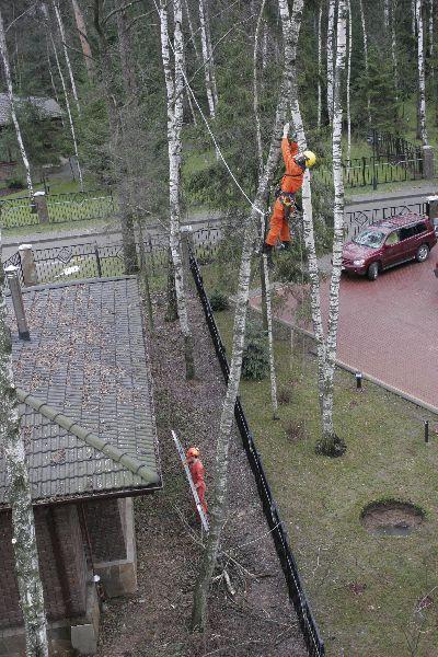 Спилить дерево рядом с домом